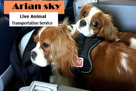 ارسال سگ با هواپیما به آمریکا