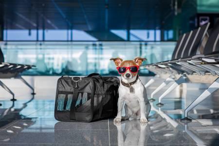 ارسال حیوان خانگی شما به کانادا | مونترال ، ونکوور ، تورنتو
