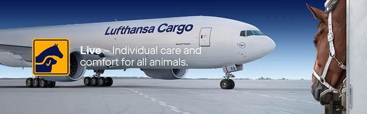 هزینه ارسال حیوان خانگی با هواپیما