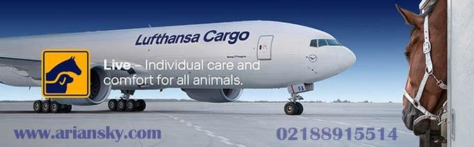 حمل حیوان زنده با هواپیما